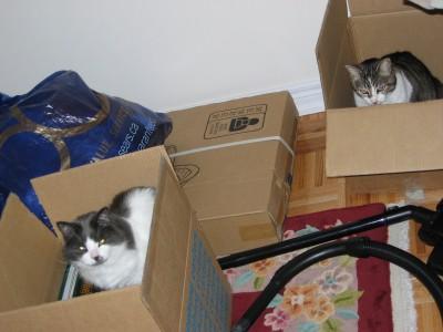Dusty and Older Cat in nursery